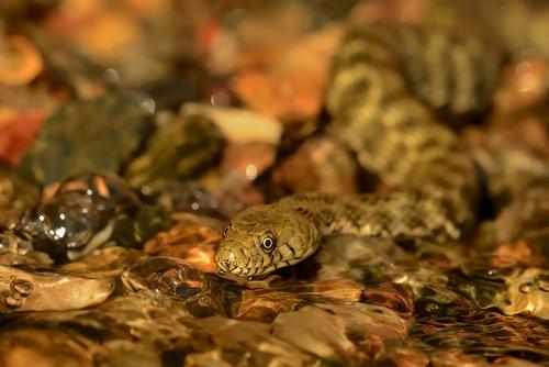 アオダイショウ 幼蛇 飼育 時期